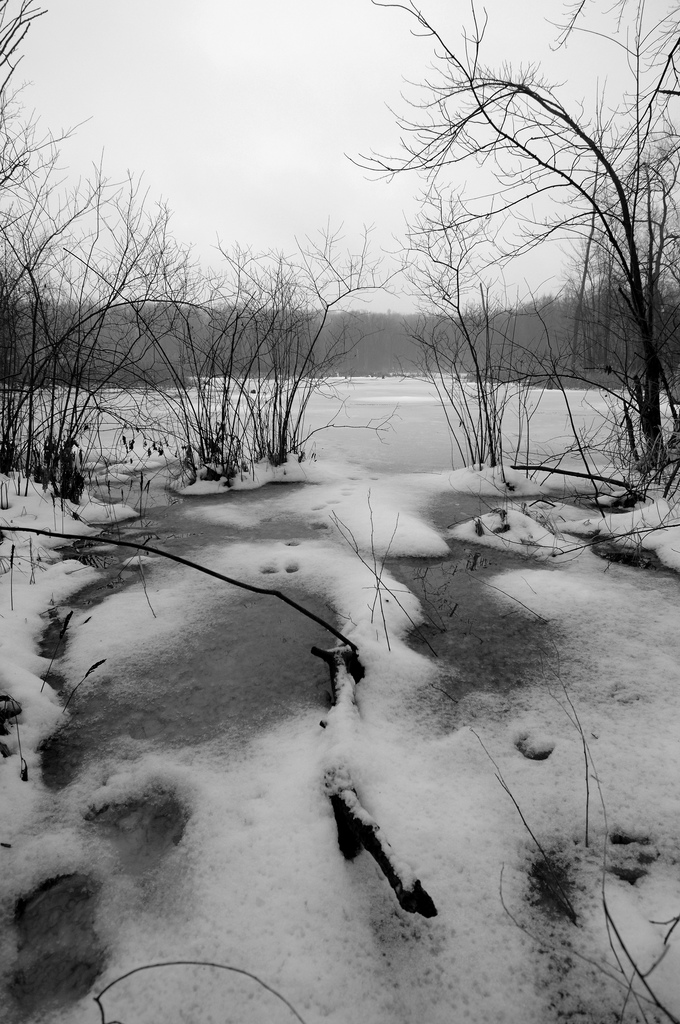 A Pond on Bald Mountain