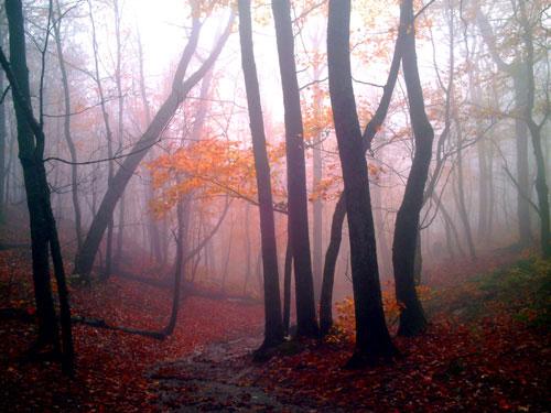 Mist Woods