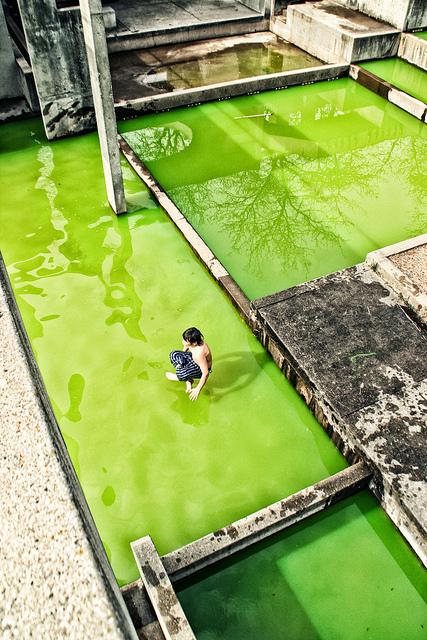 Guru Of The Green  -  Flint, Michigan