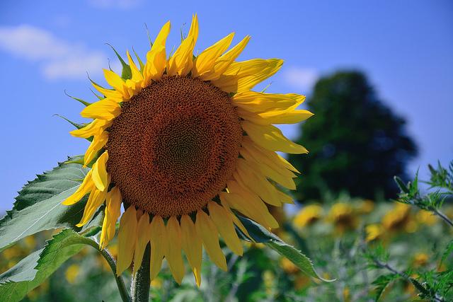 Mr. Sunshine . . .