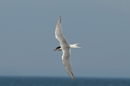 Turn of the tern