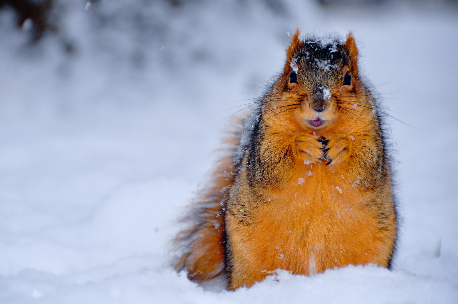 Squirrel photo via Michigan in Pictures