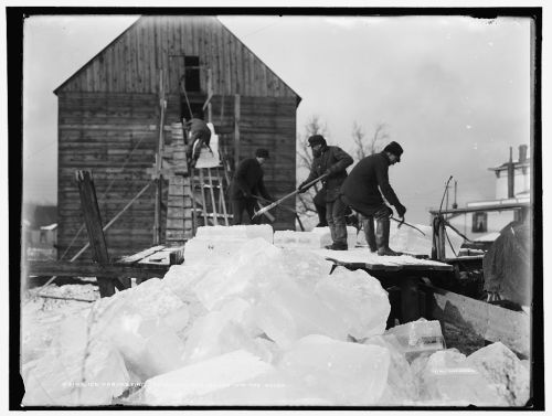 Ice Harvesting, Shooting Cakes into the House
