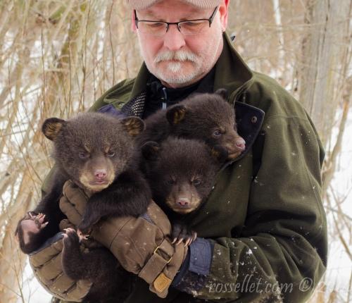 Bear Triplets