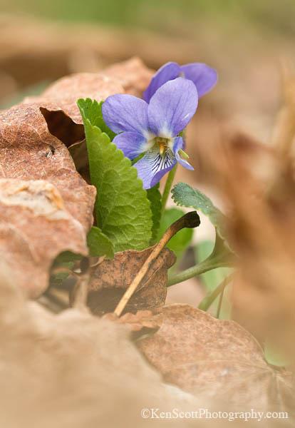 Spring Speak ... violet