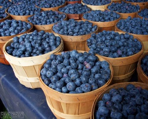 Afbeeldingsresultaat voor blueberry bushel