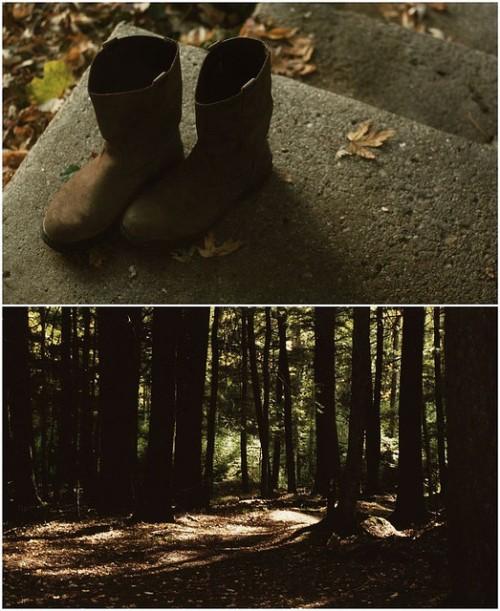 Hartwick Pines by Jenny Murray