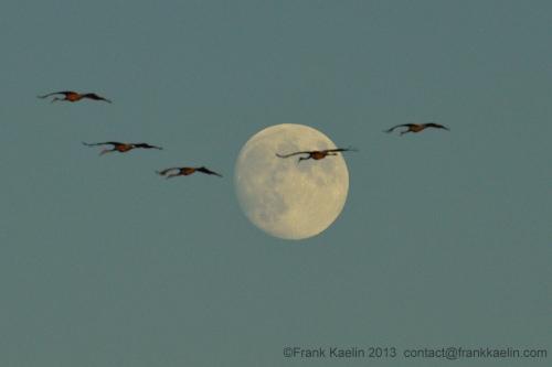 sandhill moon