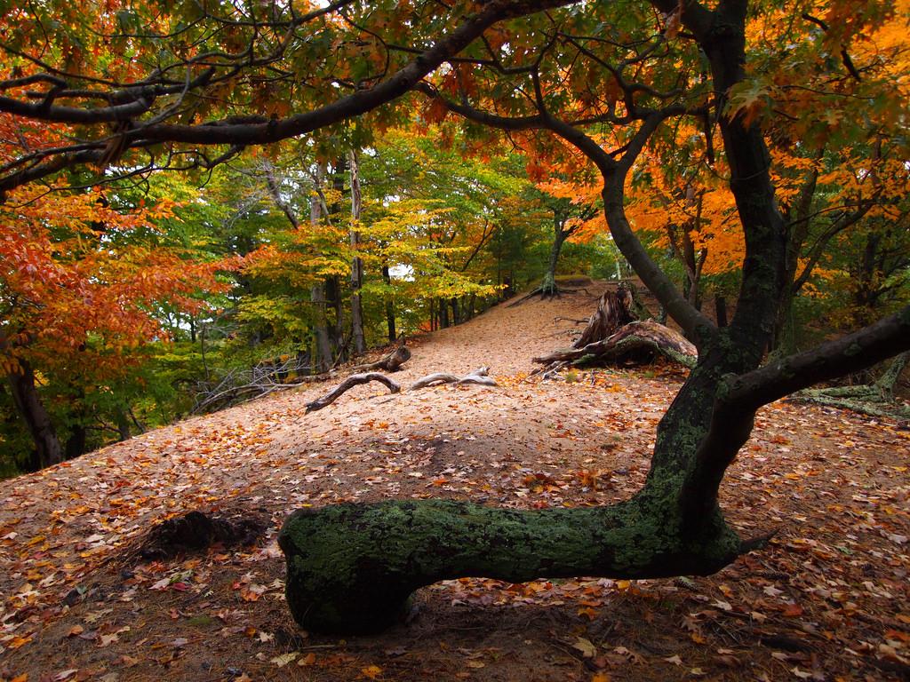 Ludington State Park Ridge Trail