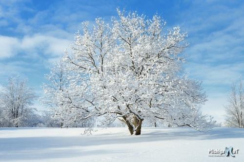 Christmas Day Snowfall