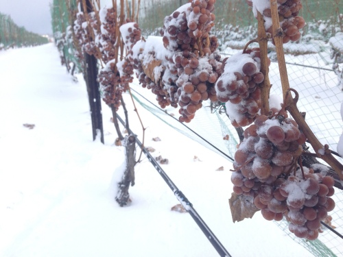 Ice Wine Season