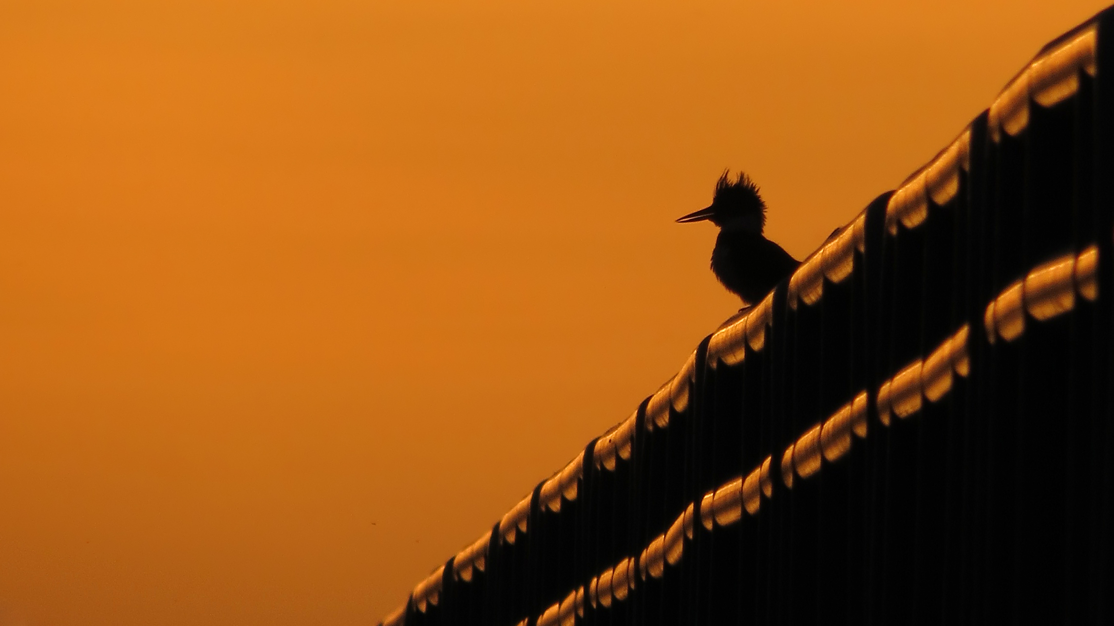 kingfisher hd friday kingfisher silhouette
