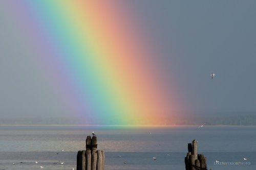 Lower Harbor Massive Rainbow