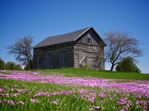 Old Cabin In Spring