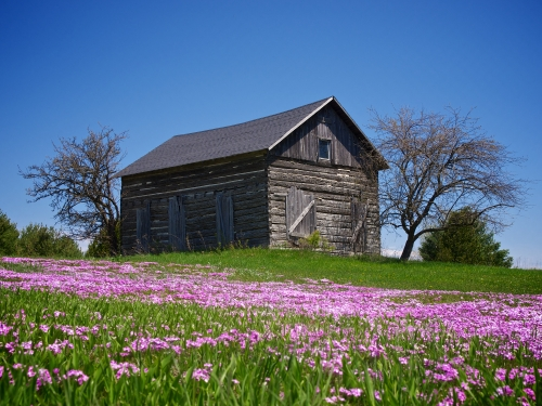 Old Cabin In Spring
