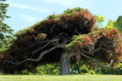 The Crooked Tree Petoskey