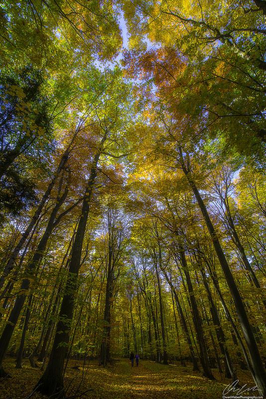 Fall Color 2015 in Michigan