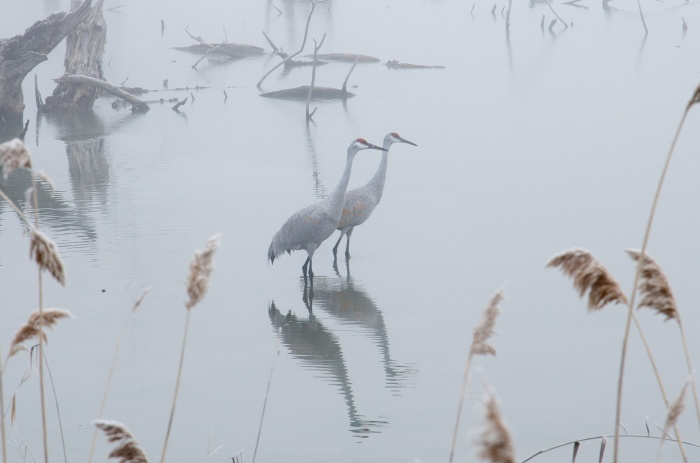 Sandhills in the Mist