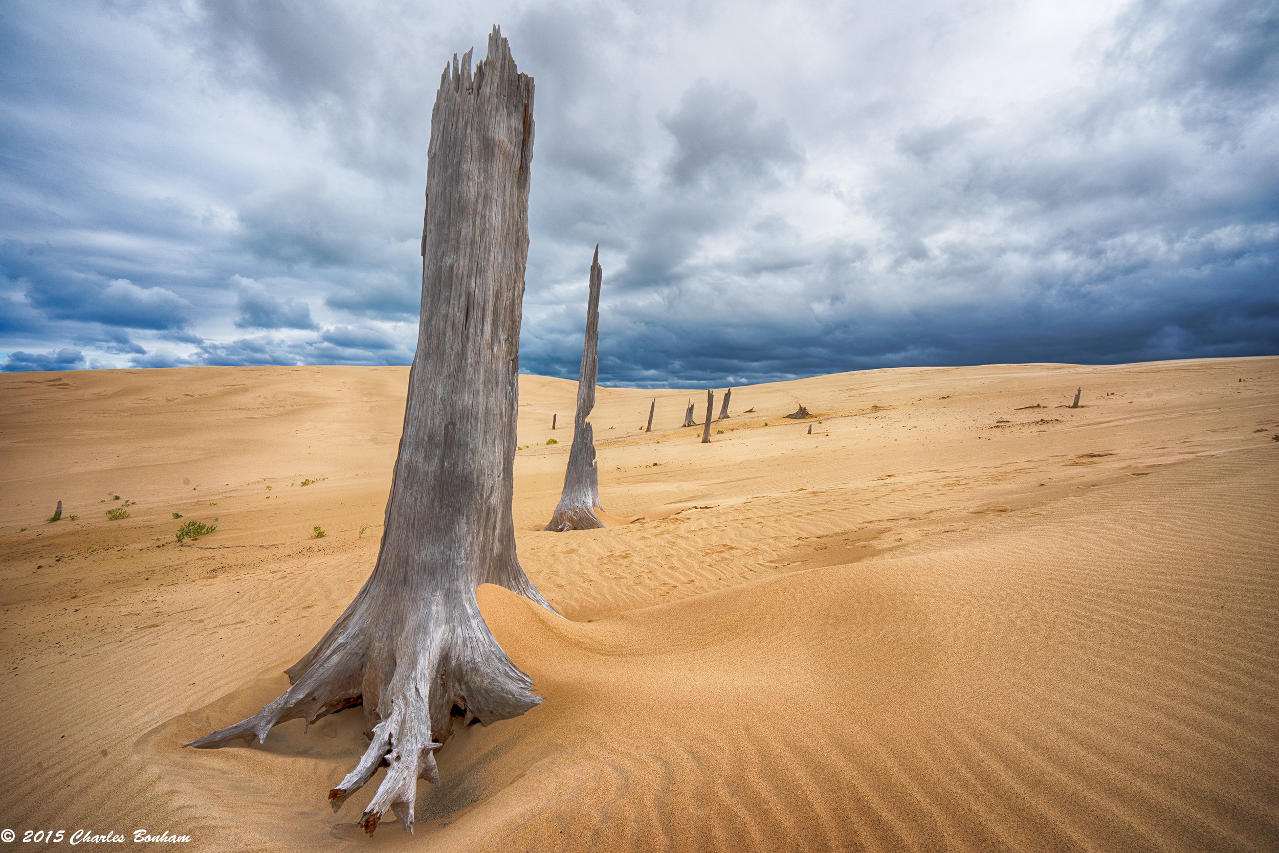 The Ghost Forest In Silver Lake Dunes Michigan In Pictures