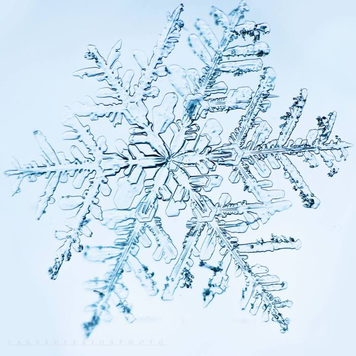 A Snowflakes Life