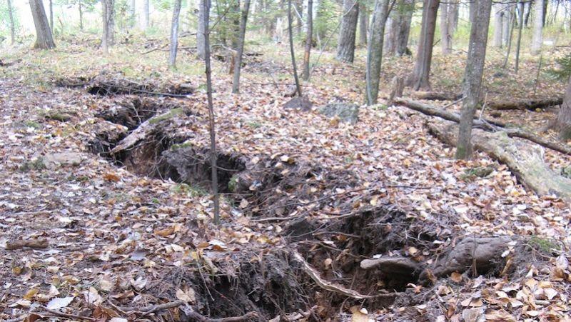 Birch Creek Michigan Crack in Forest