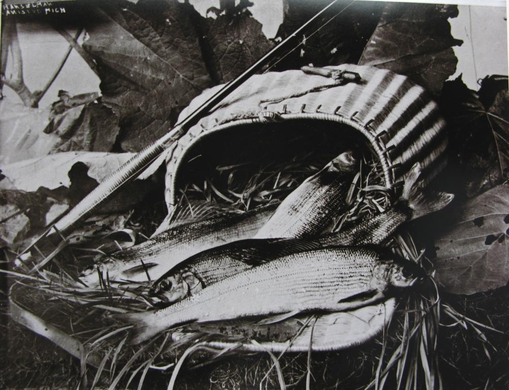 michigan-grayling