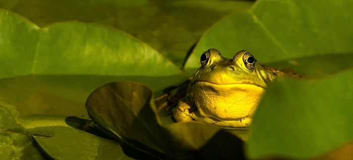 Frog Friday You Looking at Me Edition