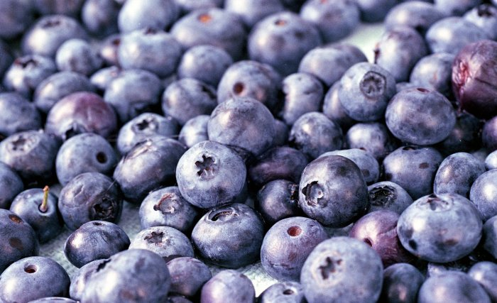 july-blueberries-by-mark-obrien