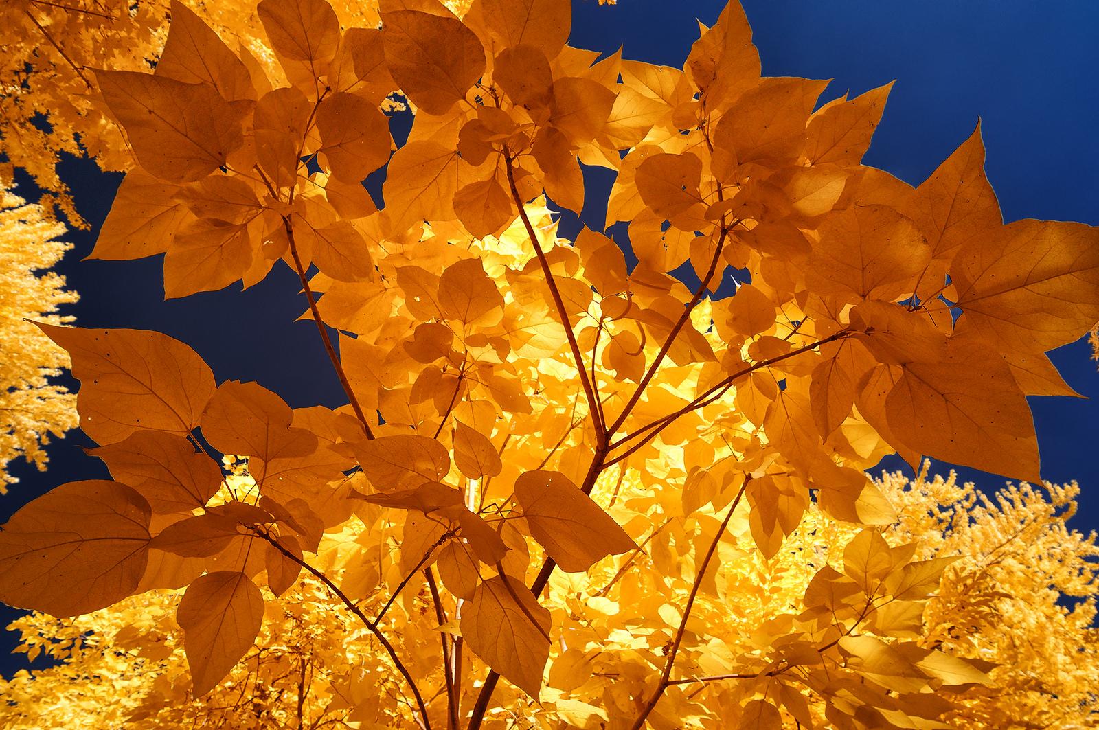 yellow-glory-by-scottie