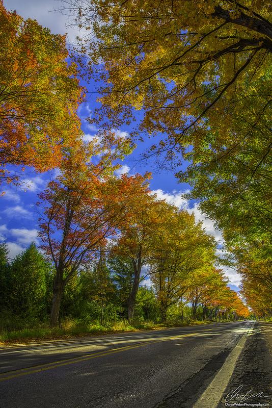 autumn-tree-tunnel-on-m-22