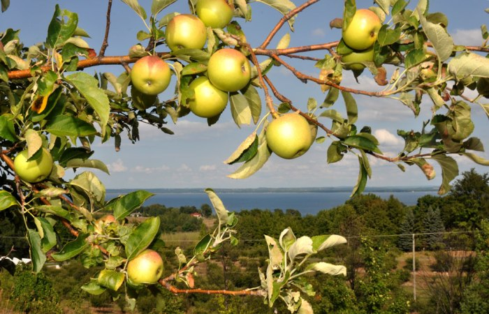 grand-traverse-bay-apples