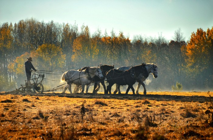 amish-farmer-plowing-james-korringa