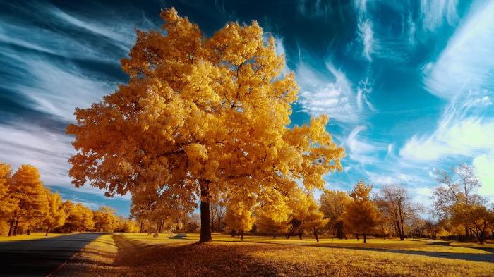 super-color-tree