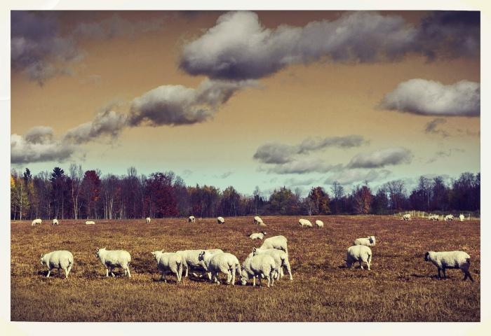 alien-sheep-by-swatzo