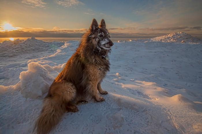 ice-beast-of-the-frozen-tundra