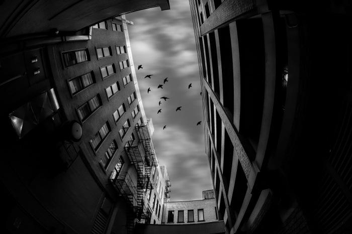 alley-adventures-jerry-james