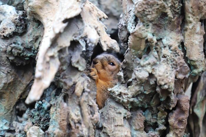 Fox Squirrel in Ann Arbor University of Michigan