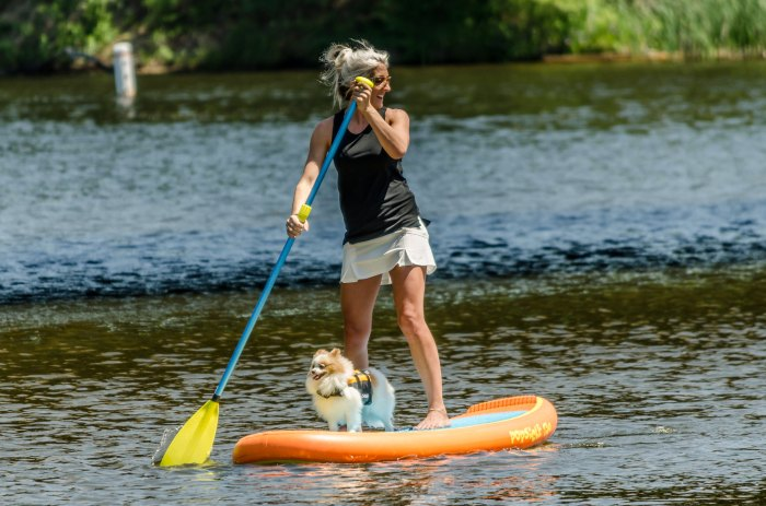 Paddle Board Dog by Jack