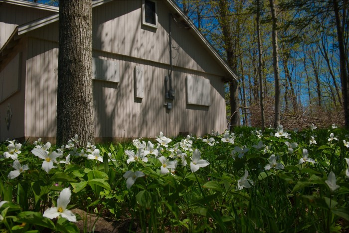 Trilliums Gone Wild by Kent Babb