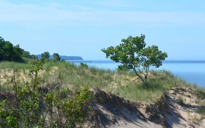 Saugatuck Dunes State Park by Terry Zweering