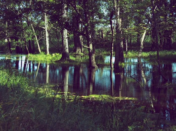 Trees Reflected by Joel Dinda