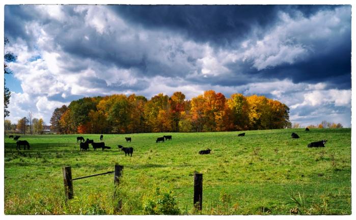 Autumn Pasture by paulh192