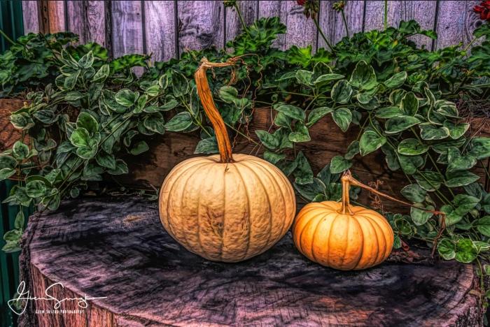 Pumpkins by Glenn Susko