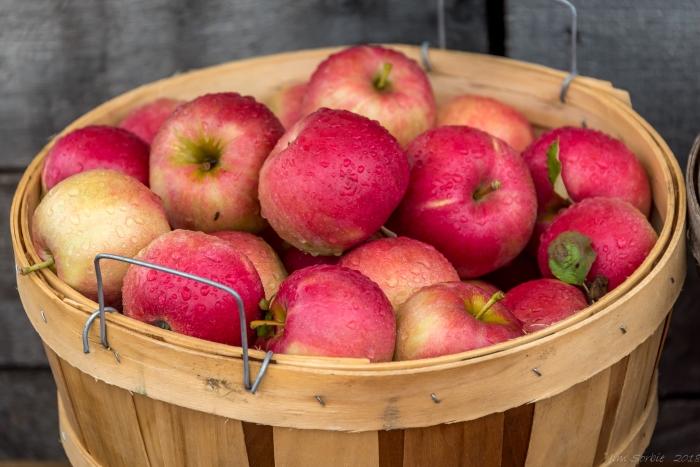 Harvest Time by Jim Sorbie