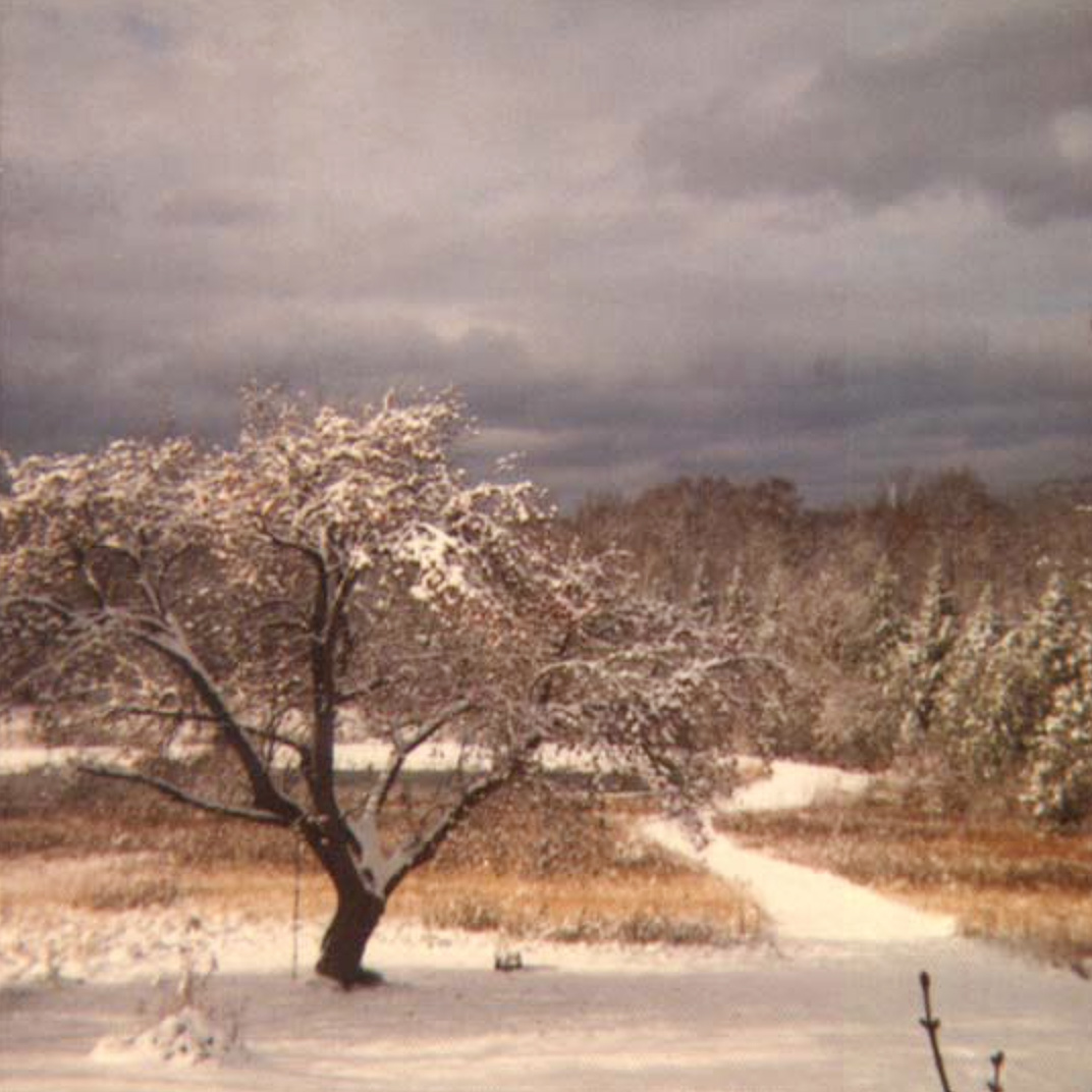 The Apple Tree in Winter by Allan L McFarlane