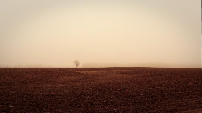 A Tree in the Fog by Joel Dinda