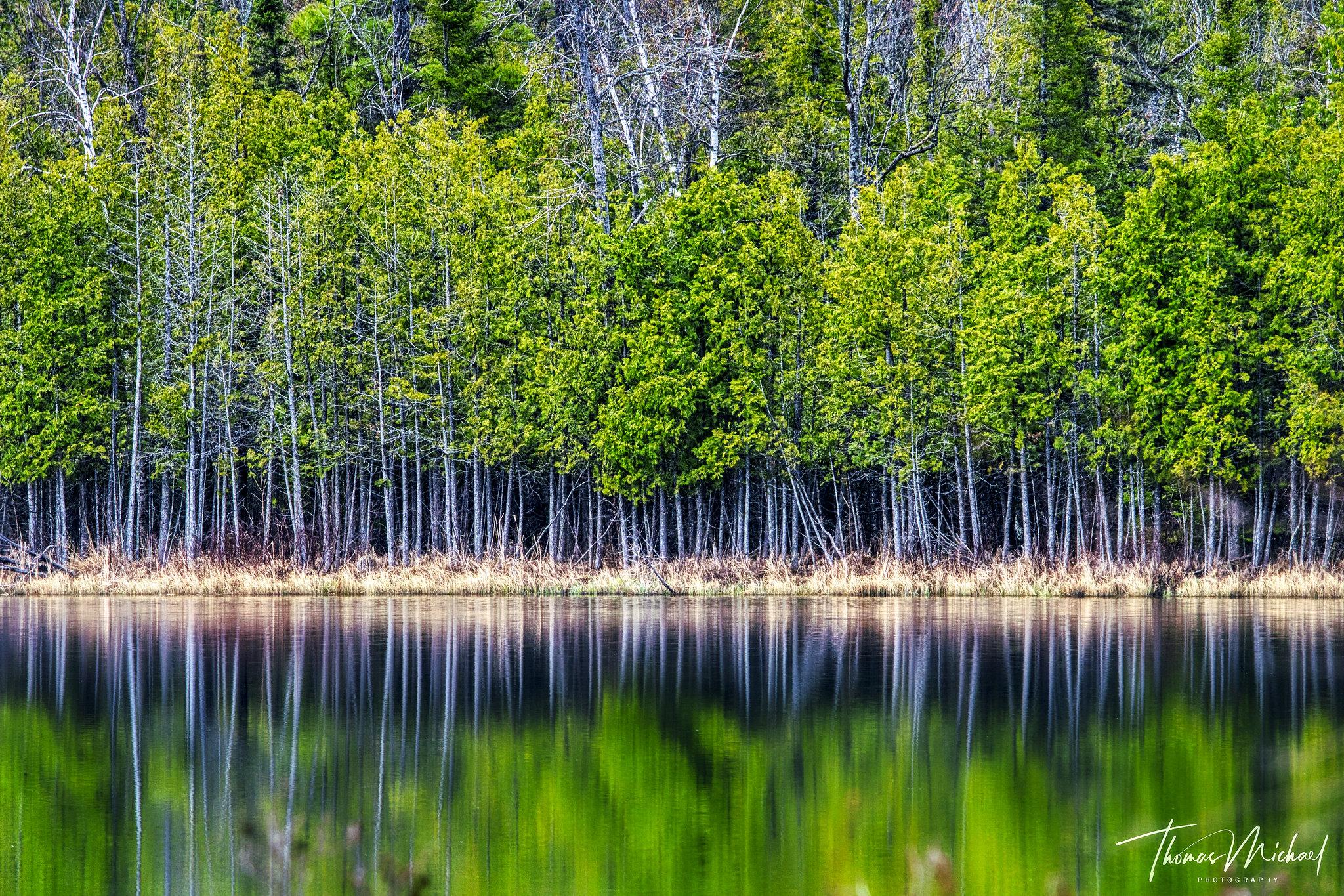 Cedar by Thomas Michael