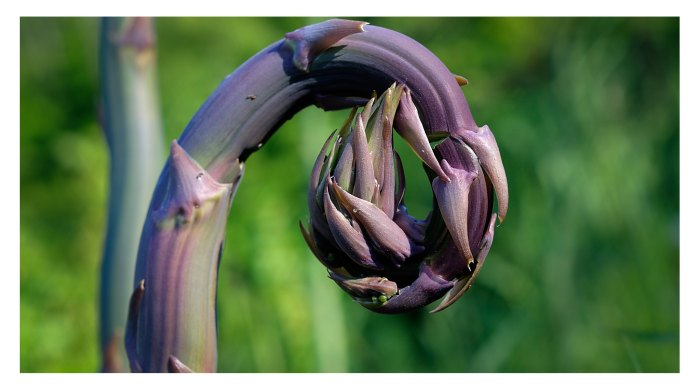 Purple Curl by Mark Smith