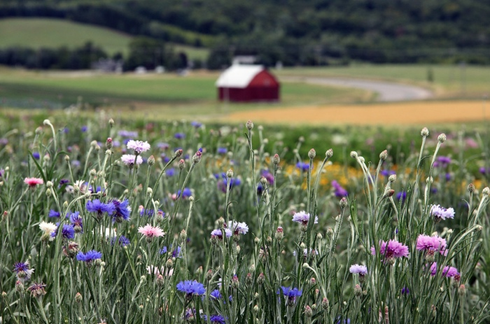 Field of Flowers at the Farm by Robert F Carter