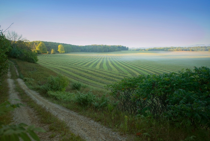 Lines on a September Morning by TP Mann